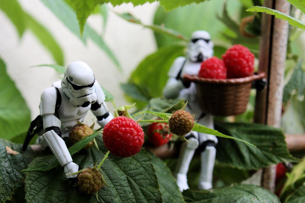 498 Смешные фрукты