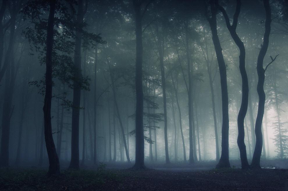 Как сделать туман в премьере
