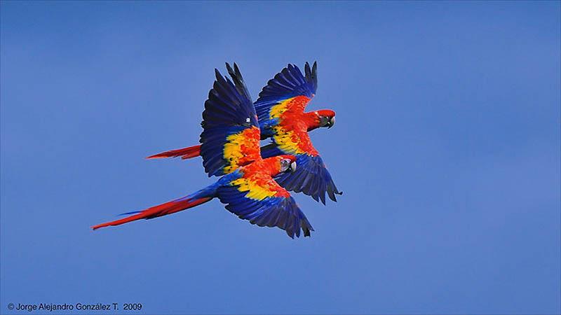 5119 40 прекрасных фотографий птиц