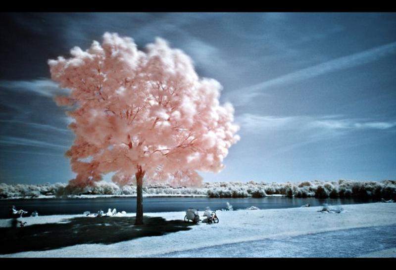 5136 Инфракрасная фотография