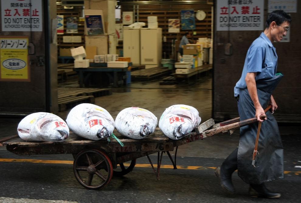 5164 Рыбный рынок Цукидзи