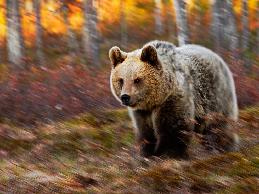 54 Лучшие фото ноября от National Geographic