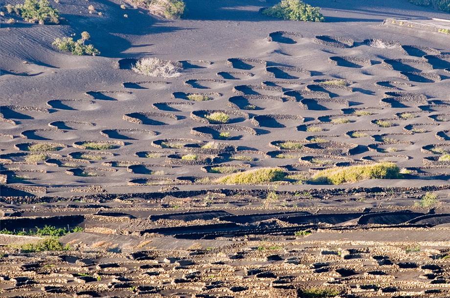 599 Вулканические виноградники острова Лансароте