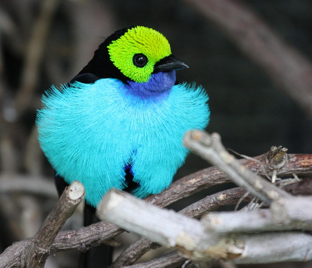 6104 40 прекрасных фотографий птиц
