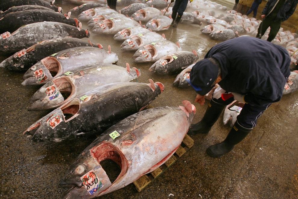 6148 Рыбный рынок Цукидзи
