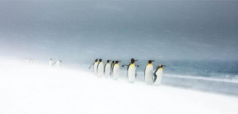 640 Лучшие фотографии дикой природы 2011