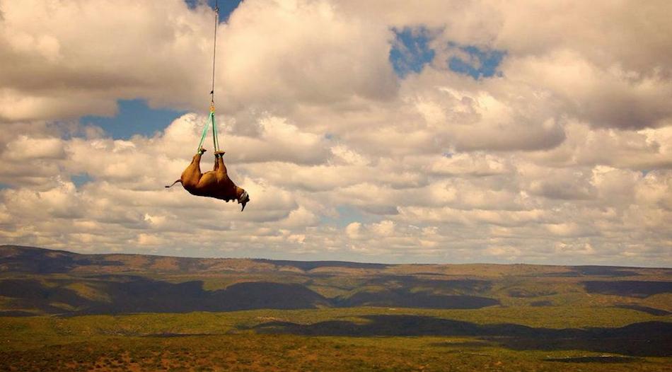 655 50 лучших фотографий животных за 2011 год