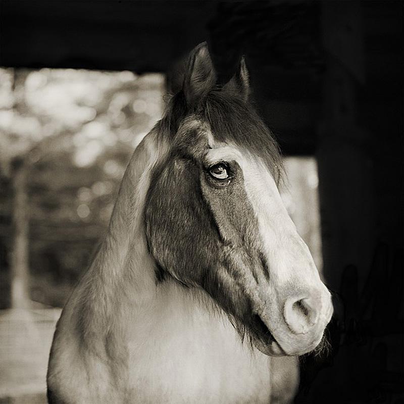 695 Фотопроект Исы Лешко Пожилые животные