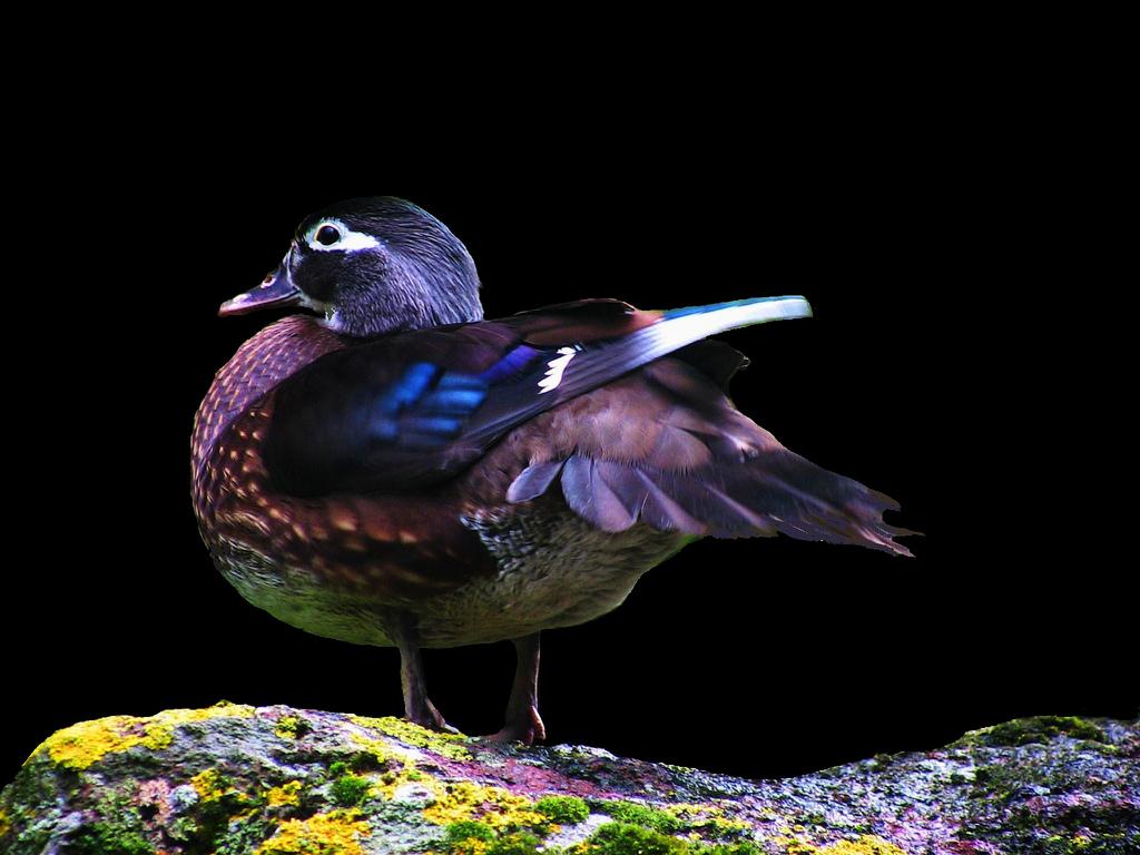 7102 40 прекрасных фотографий птиц