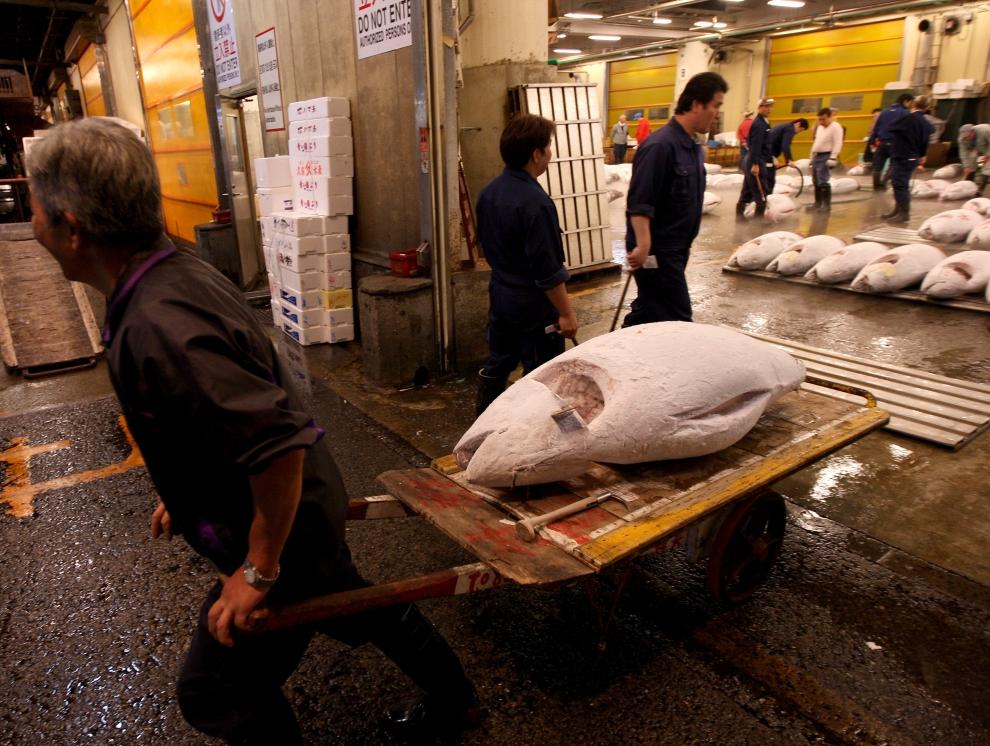 7144 Рыбный рынок Цукидзи