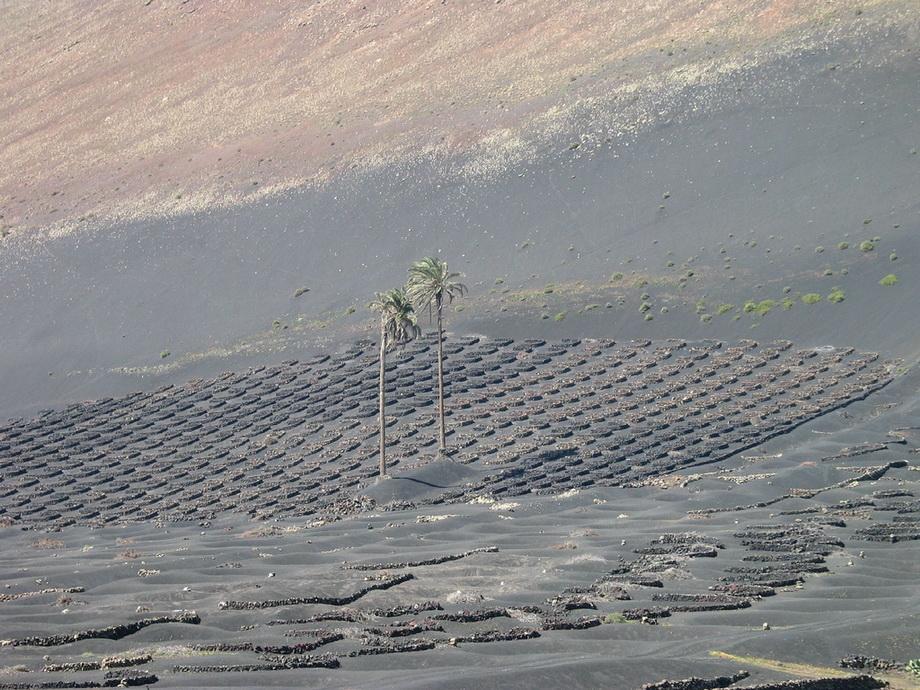 786 Вулканические виноградники острова Лансароте