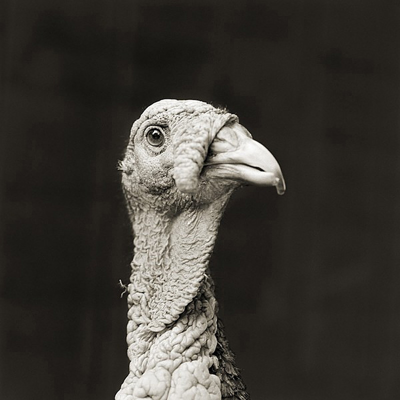 793 Фотопроект Исы Лешко Пожилые животные