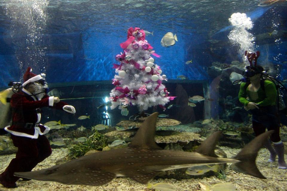 8126 Рождественские елки со всего мира