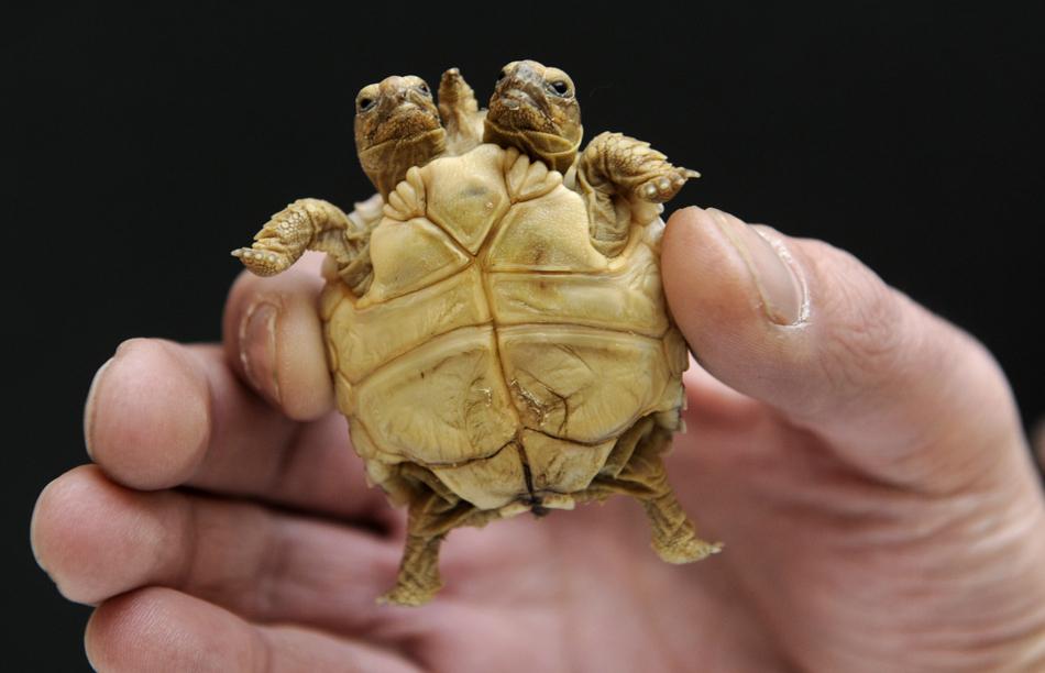 851 50 лучших фотографий животных за 2011 год