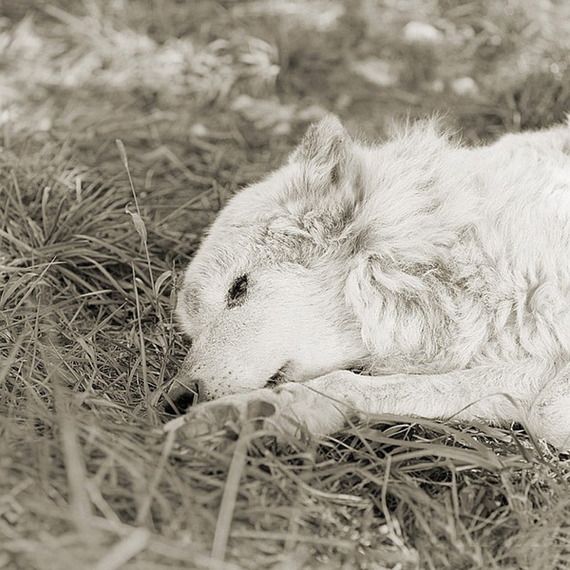 890 Фотопроект Исы Лешко Пожилые животные