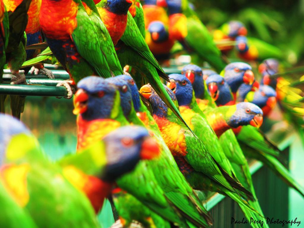 898 40 прекрасных фотографий птиц