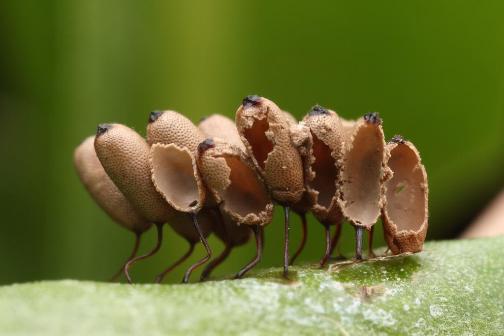 9101 Крупным планом: Яйца насекомых