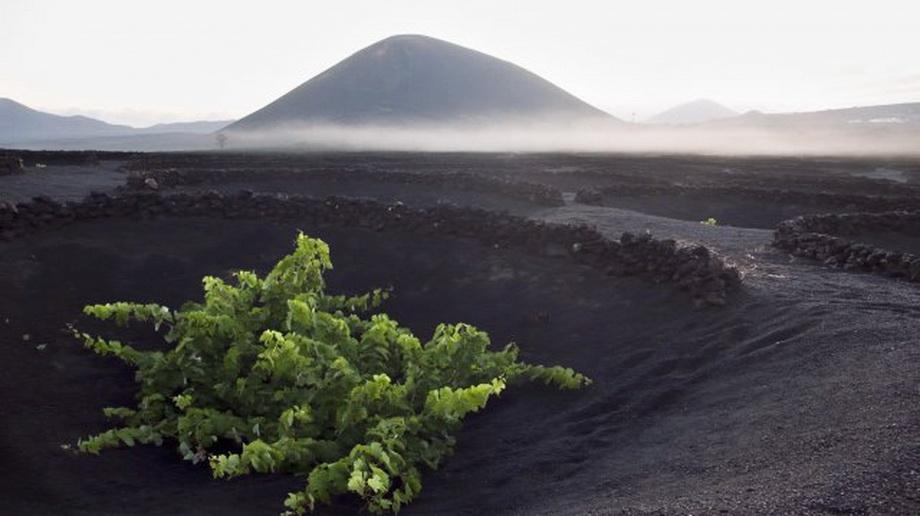 981 Вулканические виноградники острова Лансароте
