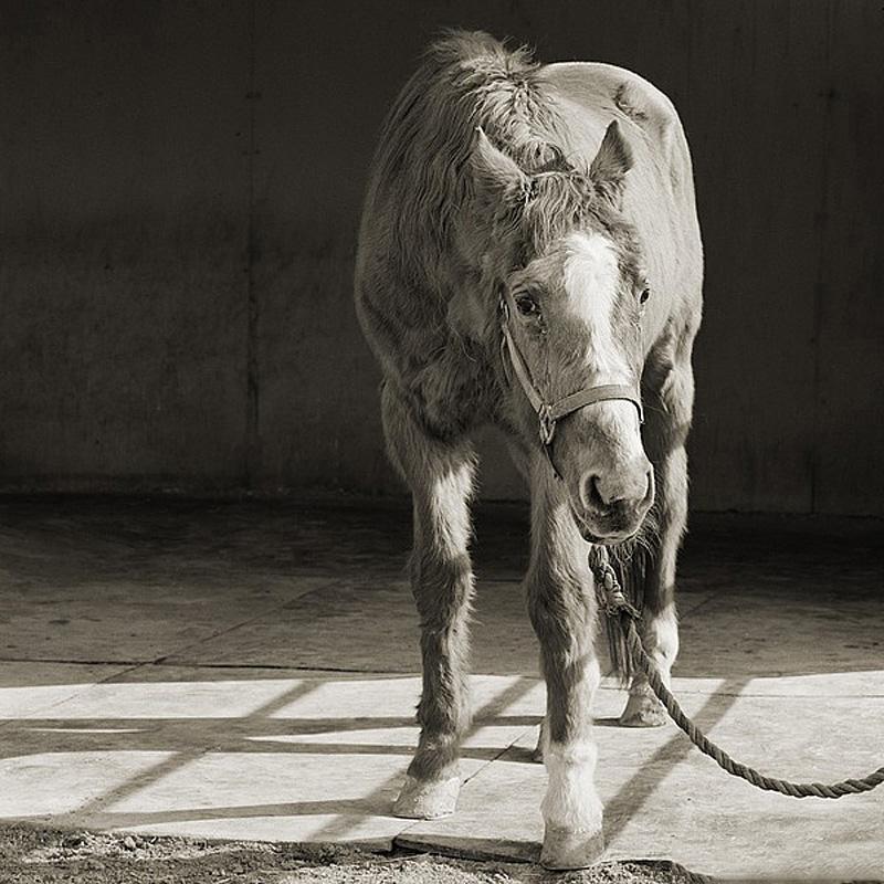 986 Фотопроект Исы Лешко Пожилые животные