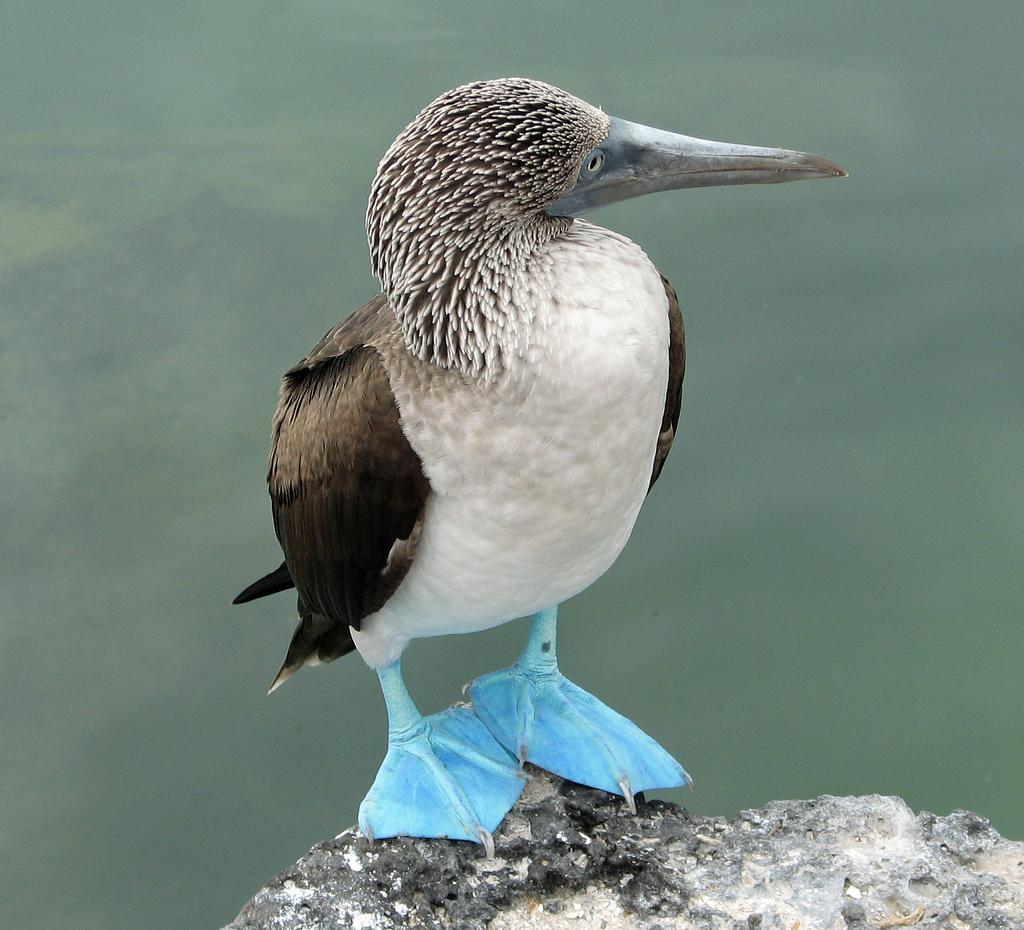 994 40 прекрасных фотографий птиц