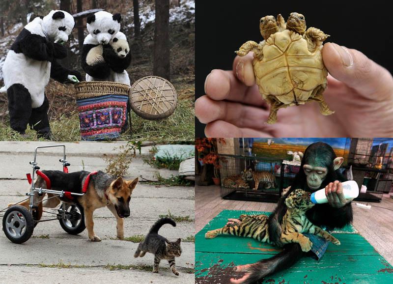 BIGPIC20 50 лучших фотографий животных за 2011 год