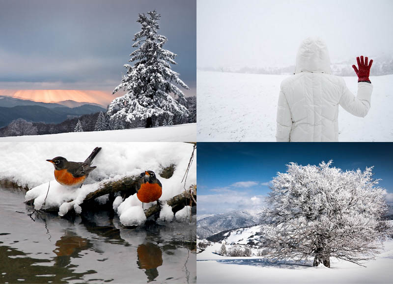 Неделя зимы