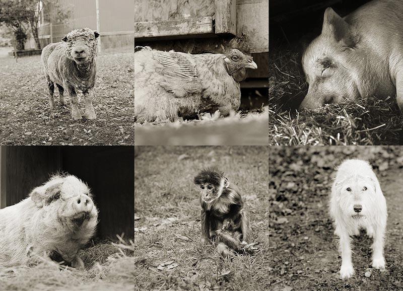 BIGPIC40 Фотопроект Исы Лешко Пожилые животные