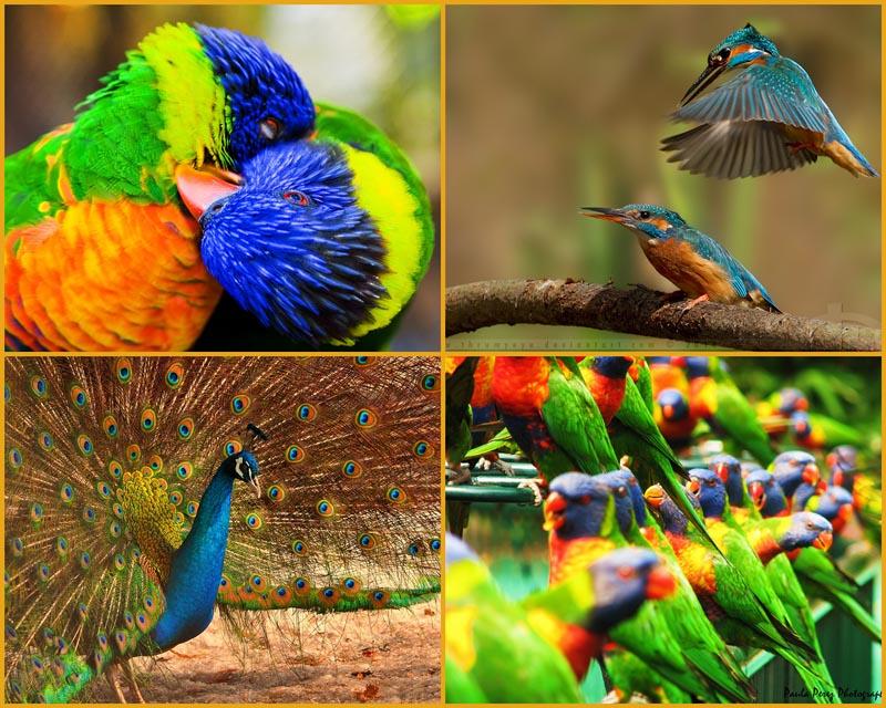 BIGPIC44 40 прекрасных фотографий птиц