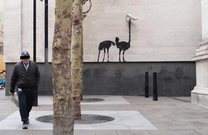 banksy osterich cctv dec11 1000 Новые работы Banksy
