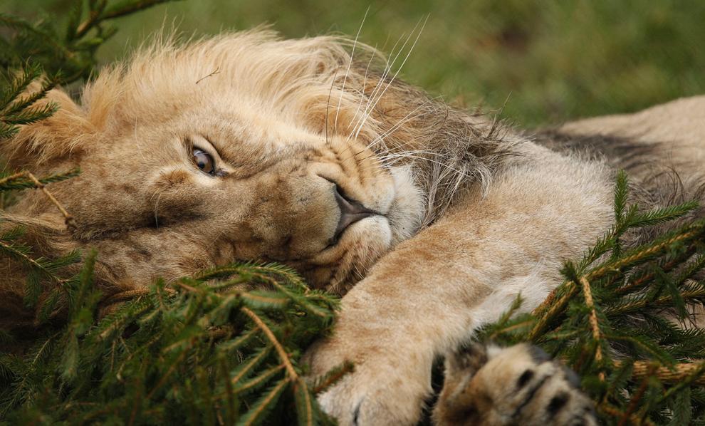 bp181 Лучшие фото дикой природы 2011