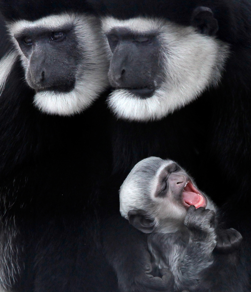 bp41 Лучшие фото дикой природы 2011