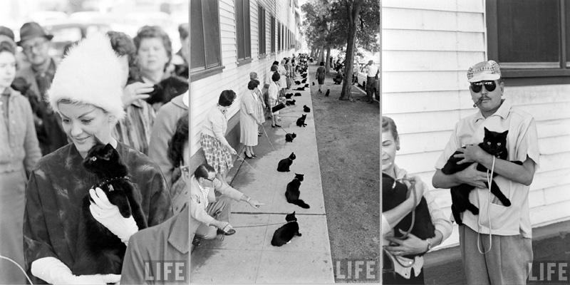 Кастинг черных котов Кастинг черных котов в Голливуде