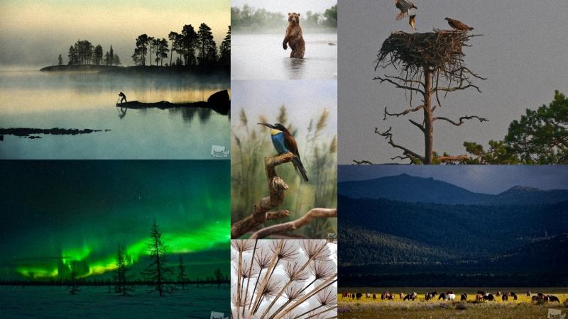 """Лучшие фотографии России 2011. Номинация """"Природа"""""""