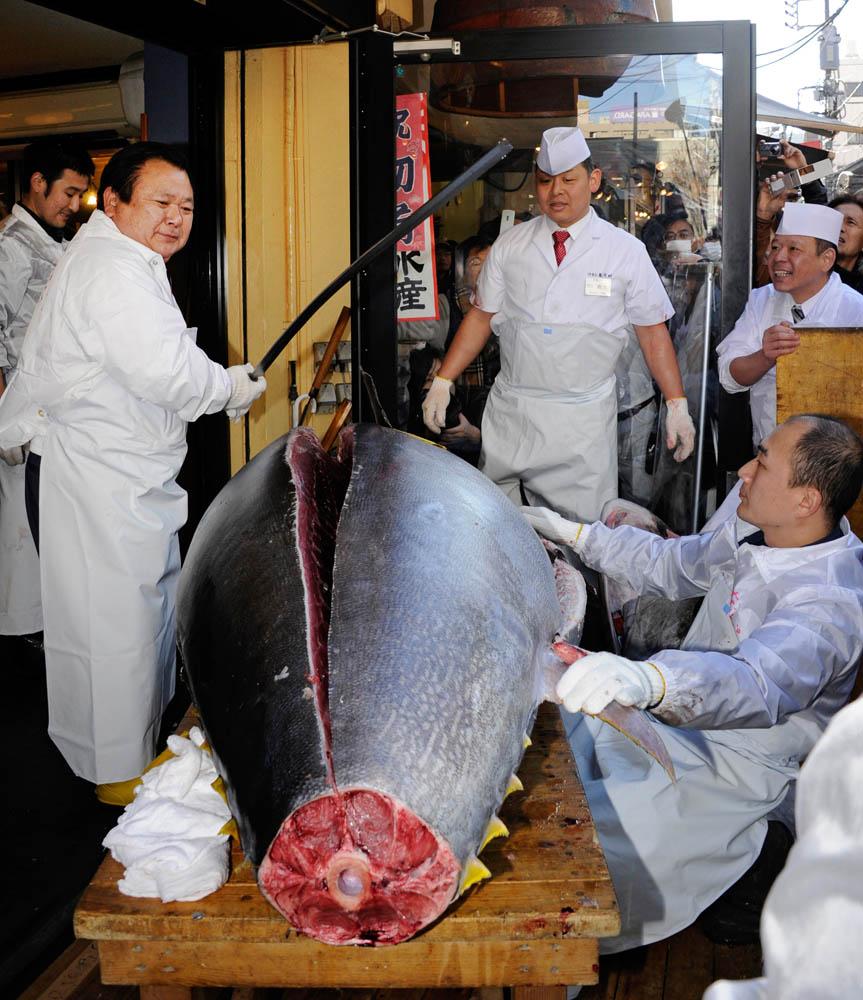 000 Hkg6766446 В Японии разделали гигантского тунца за 736 тысяч долларов