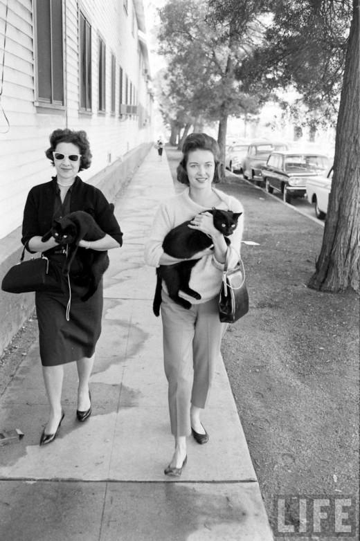 00111 Кастинг черных котов в Голливуде