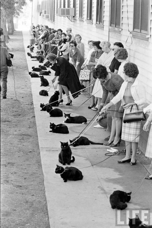 00211 Кастинг черных котов в Голливуде