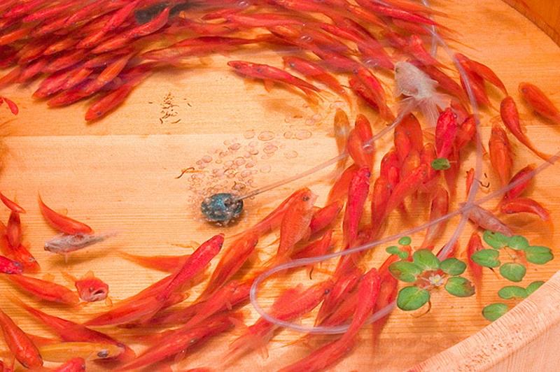 0022 Спасение золотой рыбки