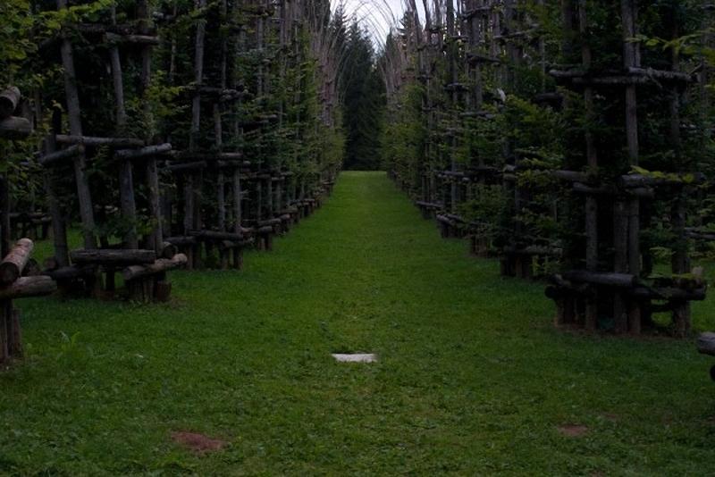 0023 Храм из растущих деревьев в Италии