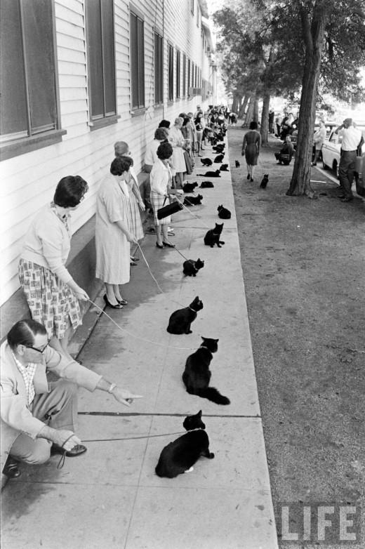 00312 Кастинг черных котов в Голливуде