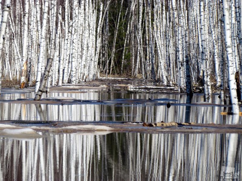 """00313 Лучшие фотографии России 2011. Номинация """"Природа"""""""