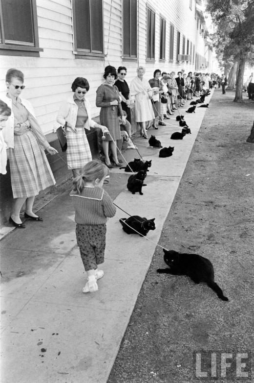 00412 Кастинг черных котов в Голливуде