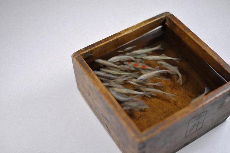 0042 Спасение золотой рыбки