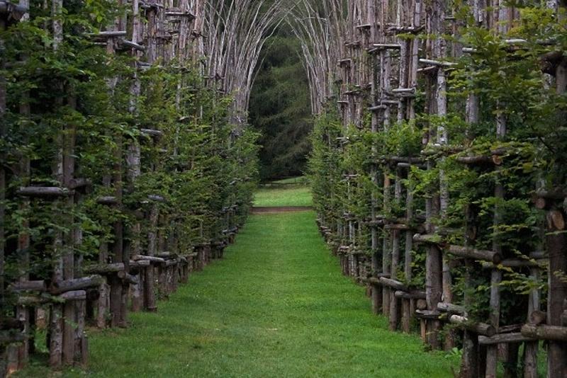 0043 Храм из растущих деревьев в Италии
