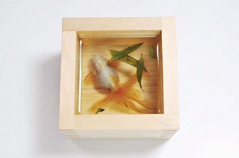 0051 Спасение золотой рыбки