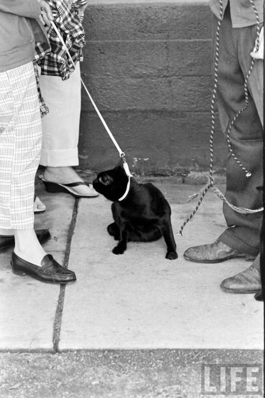 00511 Кастинг черных котов в Голливуде