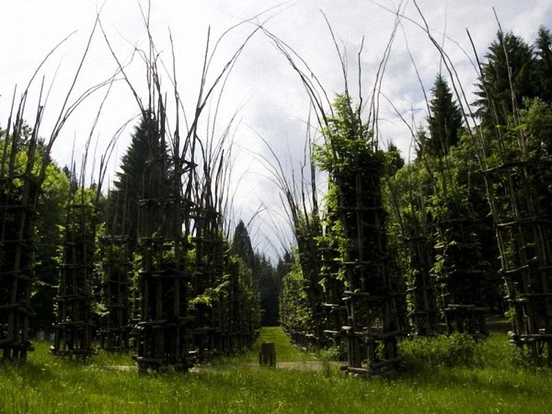 0052 Храм из растущих деревьев в Италии