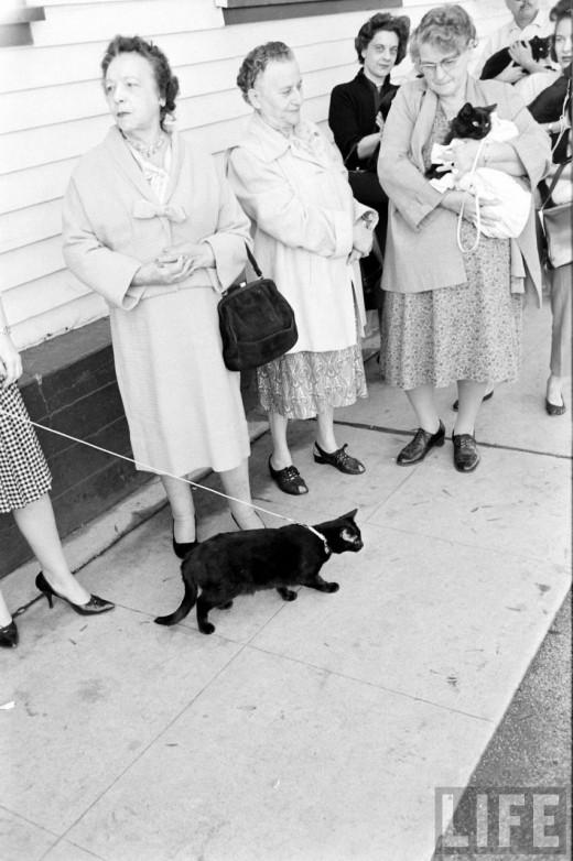 00612 Кастинг черных котов в Голливуде