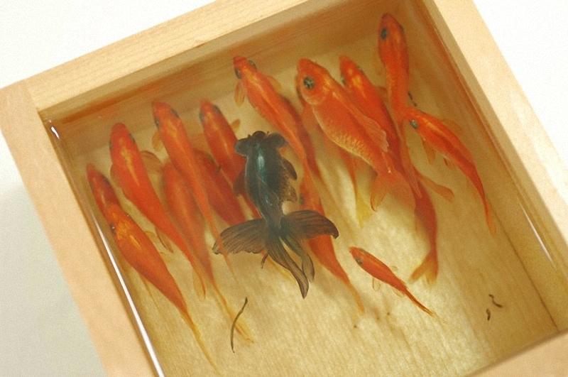 0082 Спасение золотой рыбки