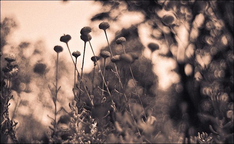 0101 Лучшие примеры фотографий с боке
