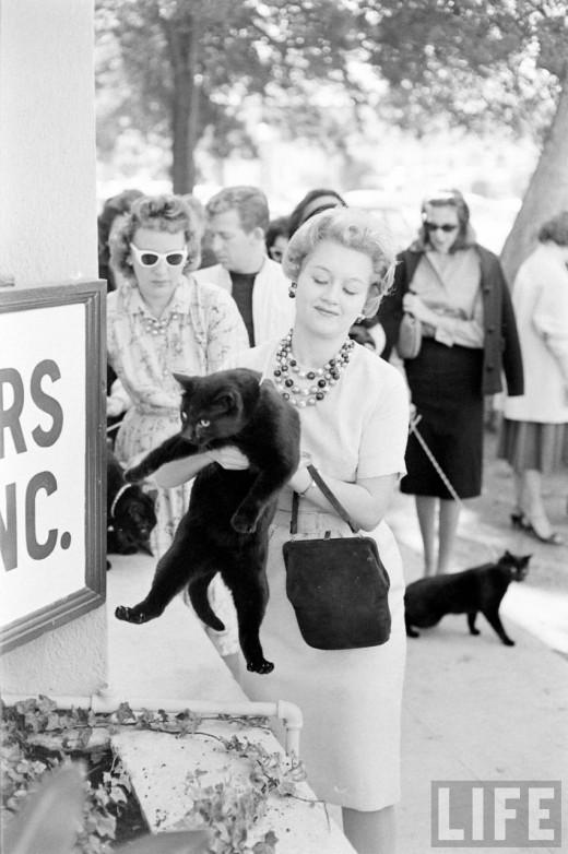 0129 Кастинг черных котов в Голливуде